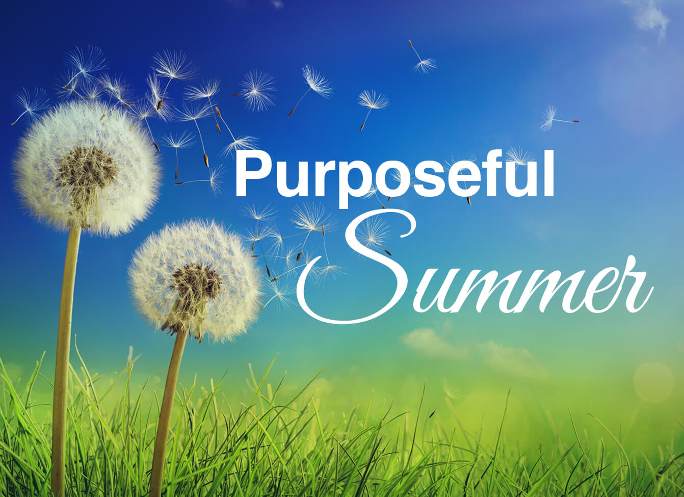 Join us for a Purposeful Summer